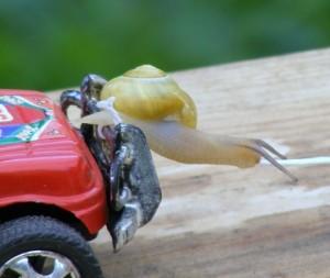escargot des jardins seul 3